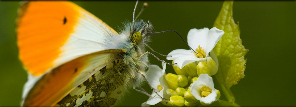 Ein Bild zum Thema Schmetterlinge