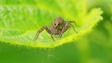 Die unbekannte Spinne